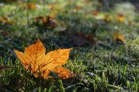 MarliesR-16-Herbstlaub_0938d