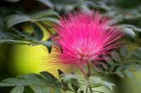20-Blumen